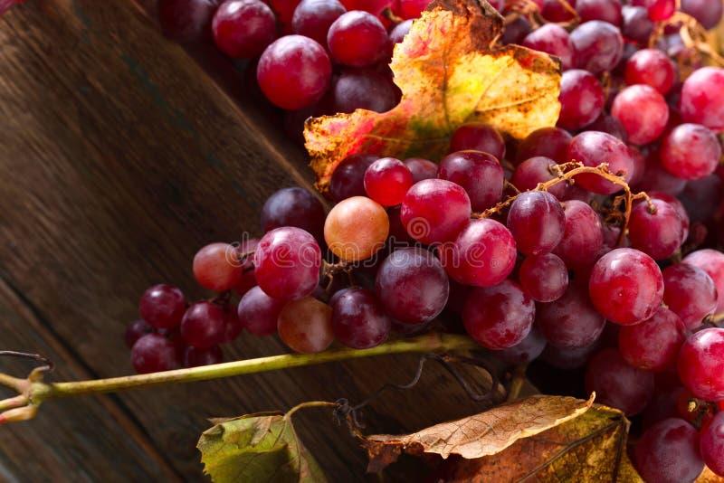 Uvas con las hojas de la uva fotos de archivo