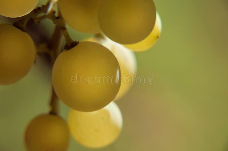 Uvas de Colseup fotos de stock