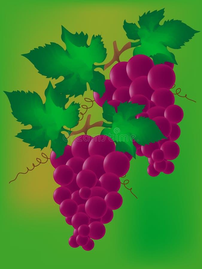 Uvas de vino libre illustration