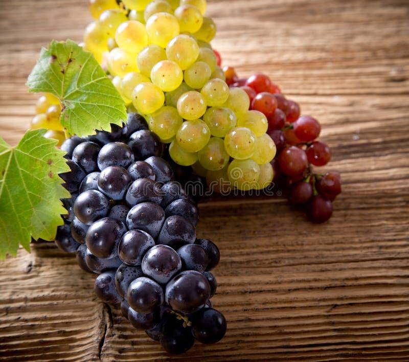 Uvas de vino en una rama de la vid fotografía de archivo libre de regalías