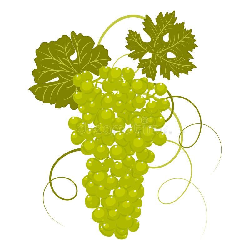 uvas del Mano-dibujo con vector de las hojas ilustración del vector