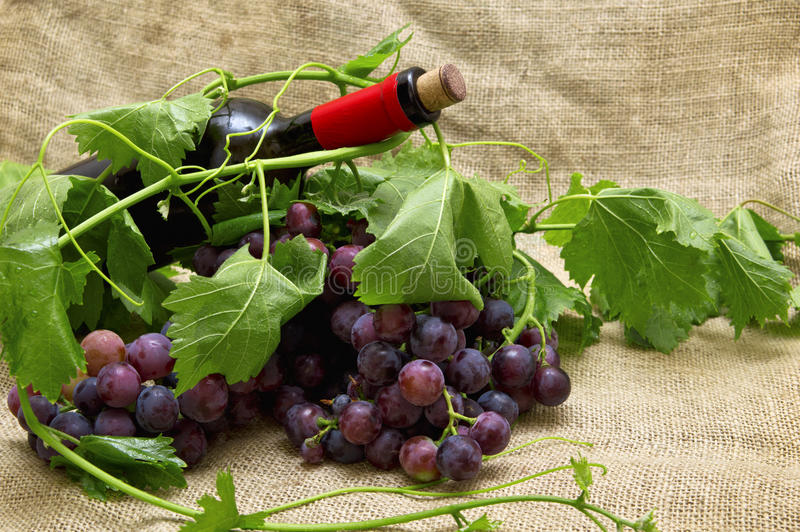 Uvas dulces sabrosas con el vino rojo en botella. imagen de archivo libre de regalías
