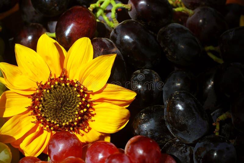 Uvas en rectángulo de la fruta de la vendimia imagen de archivo libre de regalías