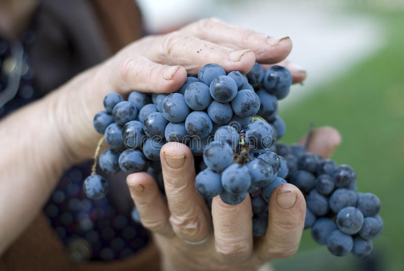Uvas frescas foto de stock