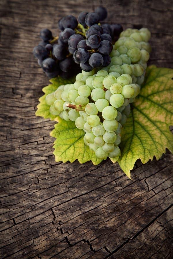 Uvas frescas imagen de archivo