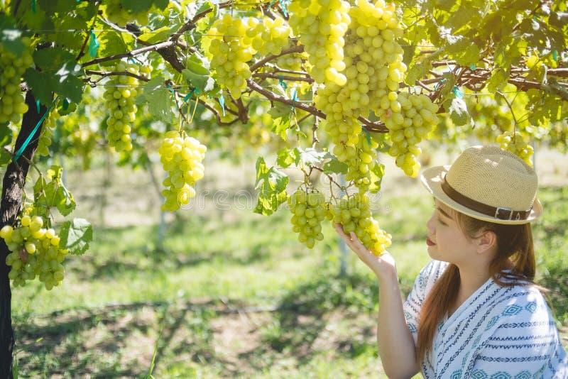 Uvas frescas de la cosecha femenina de los granjeros imagenes de archivo