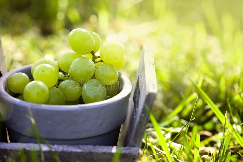 Uvas frescas en cesta fotos de archivo libres de regalías