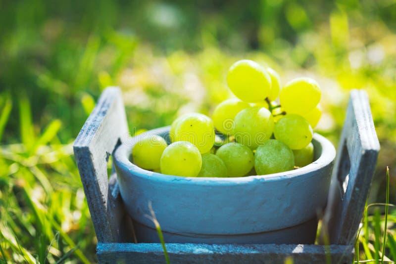 Uvas frescas en cesta imagen de archivo