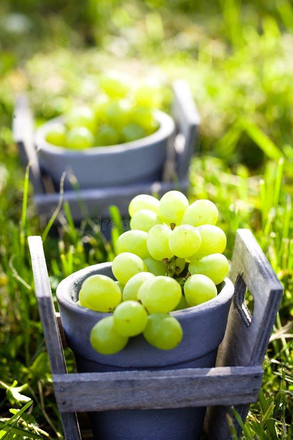 Uvas frescas en cesta foto de archivo