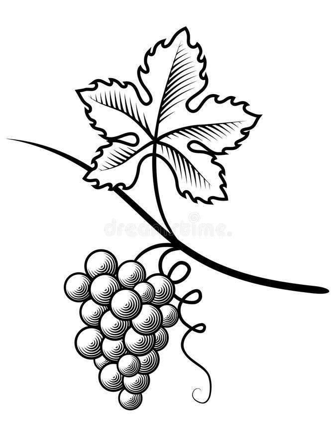 Uvas Gravura de imitação Ilustração do vetor ilustração do vetor