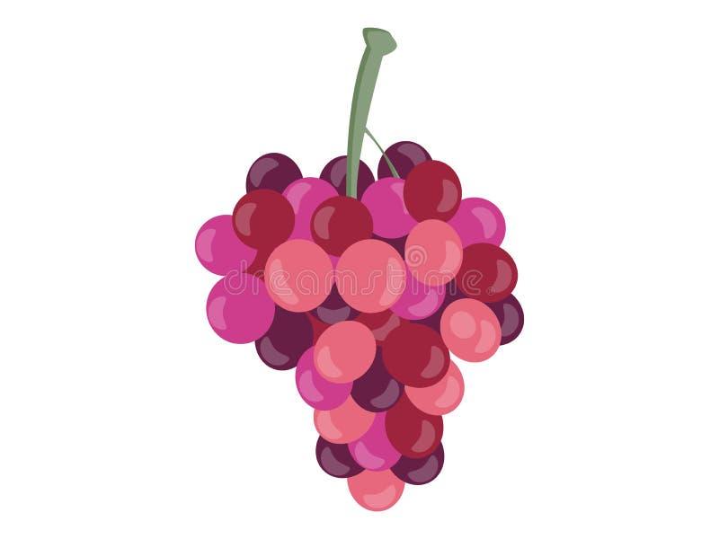 Uvas isoladas no fundo branco Grupos de uvas Vetor ilustração stock