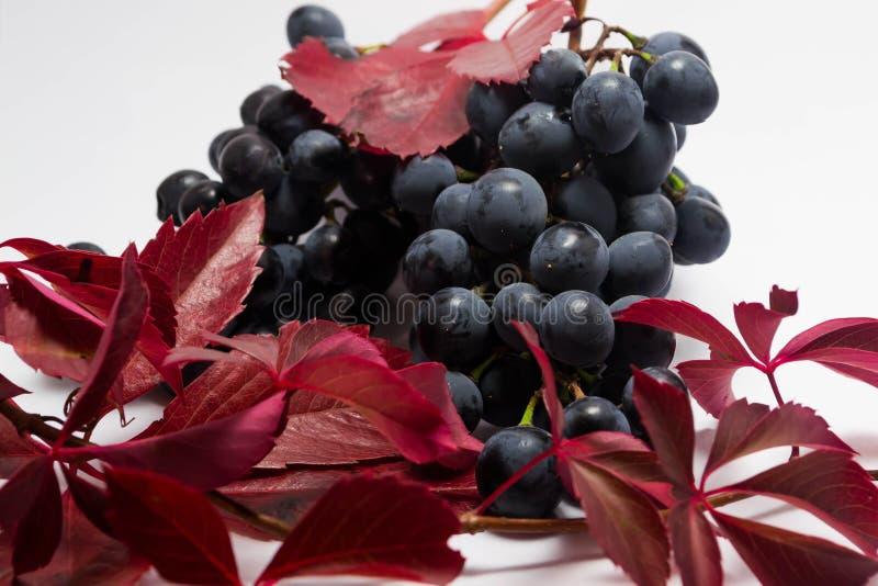 Uvas maduras 2 imágenes de archivo libres de regalías