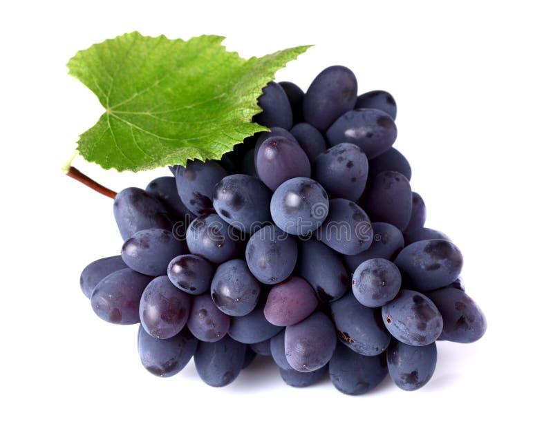 Uvas maduras com folha imagens de stock royalty free
