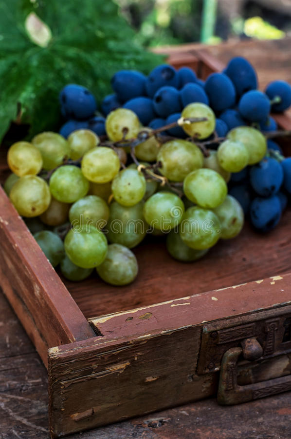 Uvas maduras de la vid fotografía de archivo