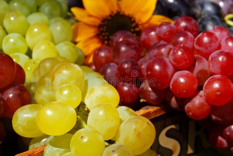 Uvas na caixa da fruta do vintage imagem de stock