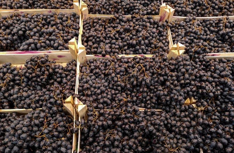Uvas negras en una ventana de la tienda imagenes de archivo