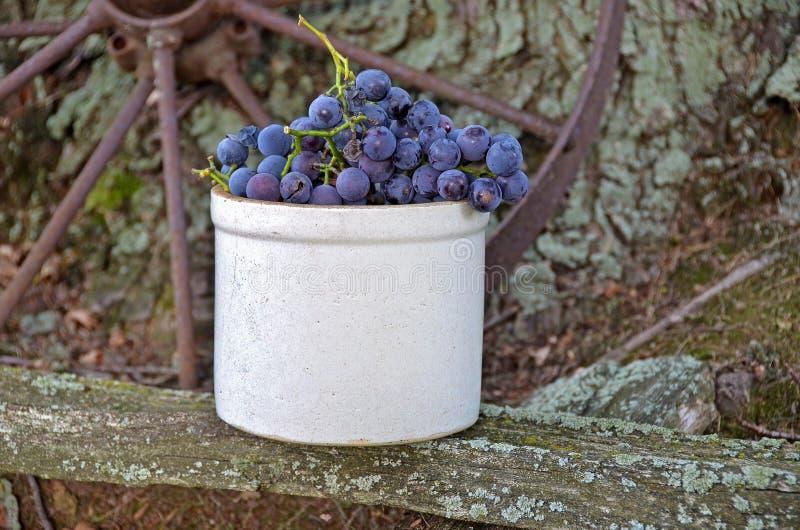 Uvas no crock velho imagem de stock royalty free