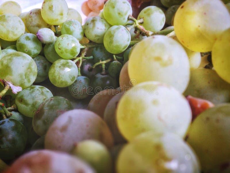 uvas para vinho muito maduras, âmbar foto de stock royalty free