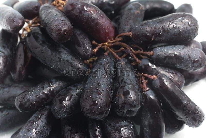 Uvas pretas longas da meia-noite imagem de stock