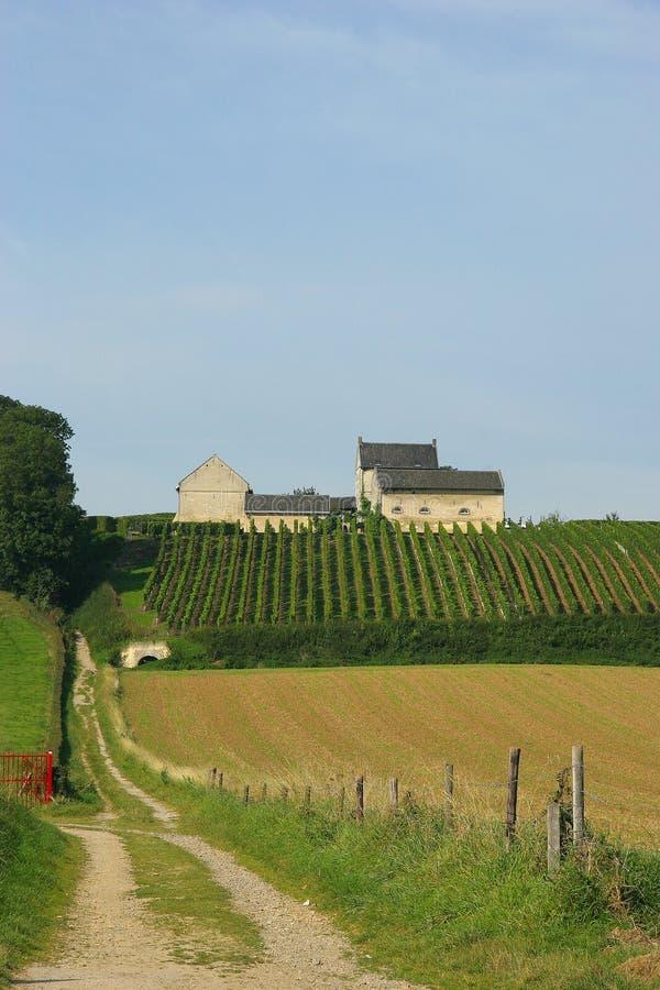 Uvas que crecen en lagar viejo en Maastricht foto de archivo libre de regalías