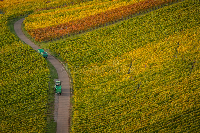 Uvas que llevan del tractor en un camino a través de los viñedos imagen de archivo libre de regalías