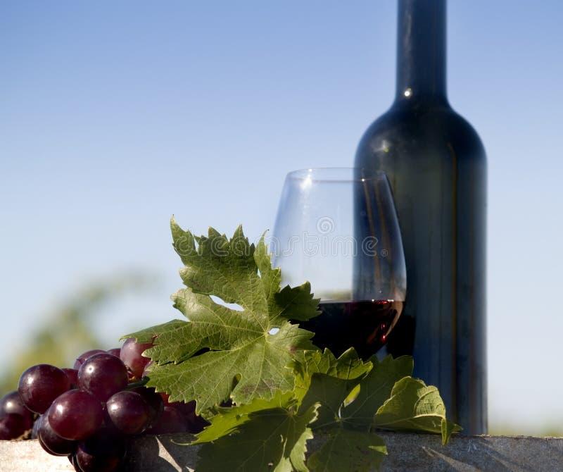 Uvas rojas y vino imágenes de archivo libres de regalías