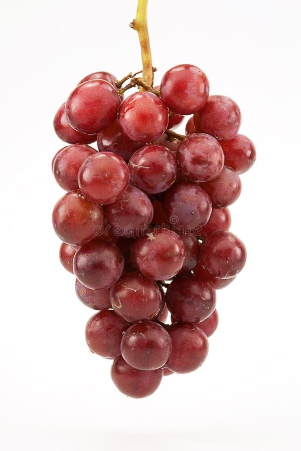Uvas sin semillas rojas en vid imagen de archivo