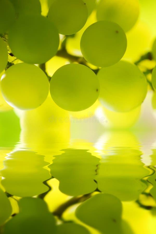 Uvas sobre a água imagem de stock royalty free
