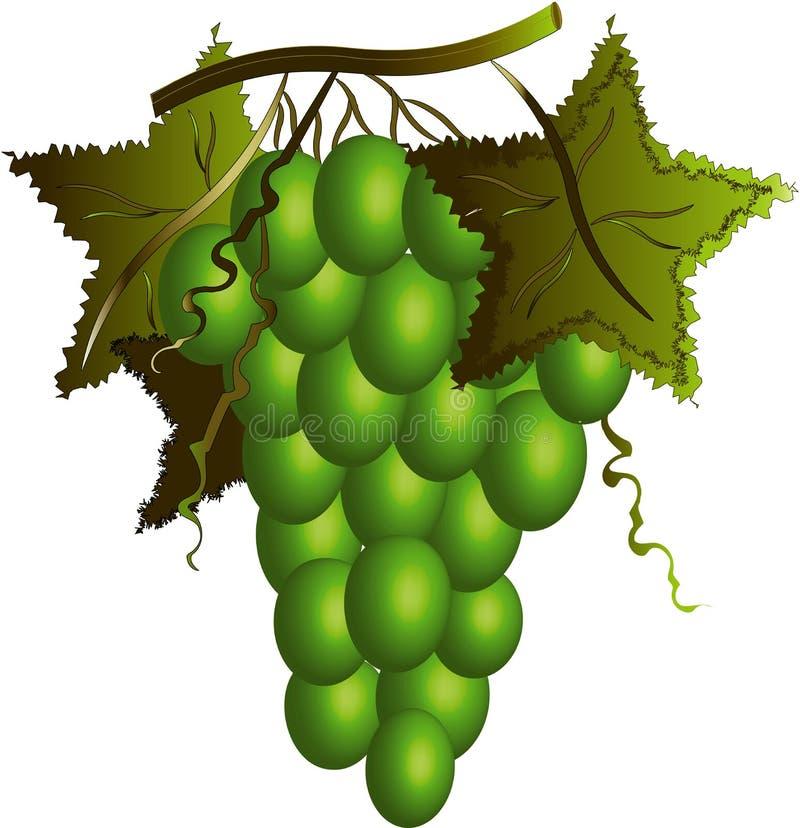 Uvas verdes. ilustração do vetor