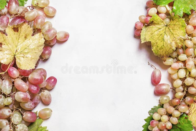 Uvas verdes e cor-de-rosa com videira e folhas, vista superior imagens de stock