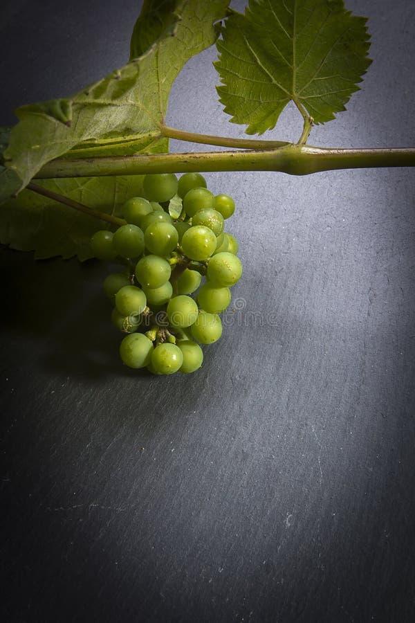 Uvas verdes en una ramificaci?n imagen de archivo