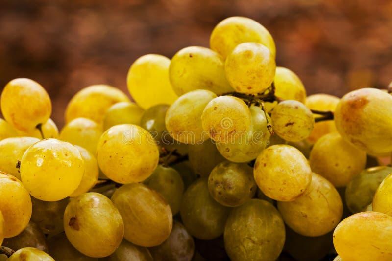 Uvas verdes macro foto de stock