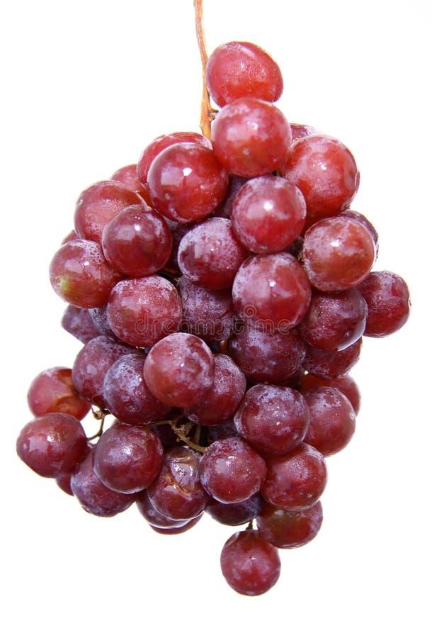 Uvas vermelhas imagem de stock