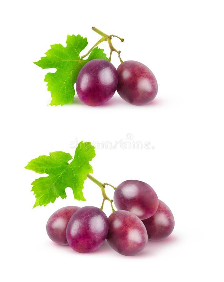 Uvas vermelhas isoladas fotografia de stock