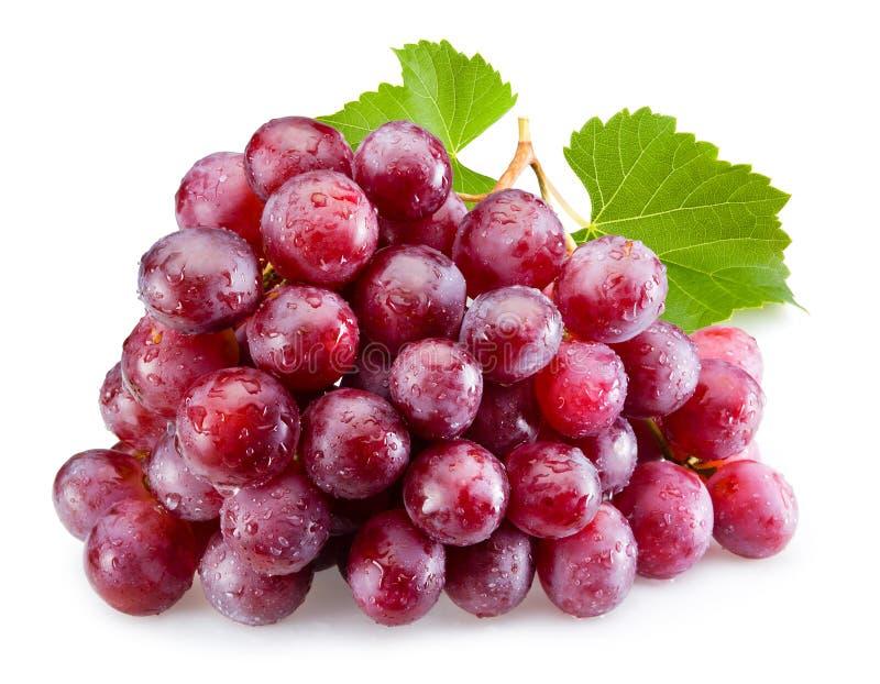 Uvas vermelhas maduras com as folhas isoladas fotografia de stock royalty free