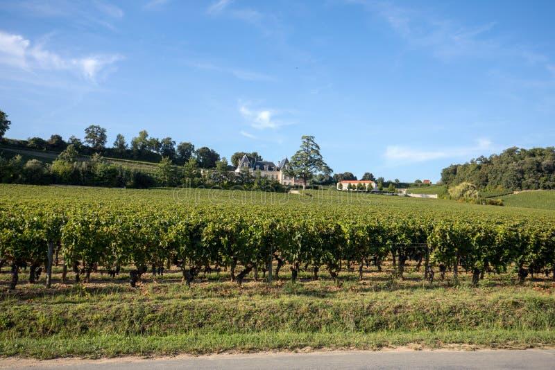 Uvas vermelhas maduras do Merlot em fileiras das videiras em um vienyard antes da colheita do vinho na regi?o de Saint Emilion fotografia de stock