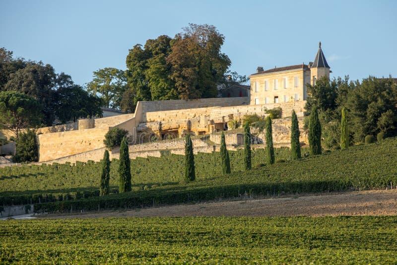 Uvas vermelhas maduras em fileiras das videiras no vienyard do La Madeleine de Clos antes da colheita do vinho na regi?o de Saint fotos de stock royalty free
