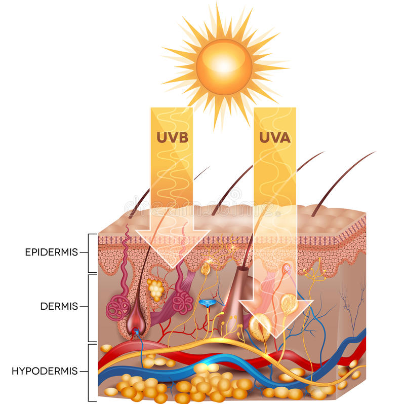 آسیب اشعه های UVA و UVB به پوست