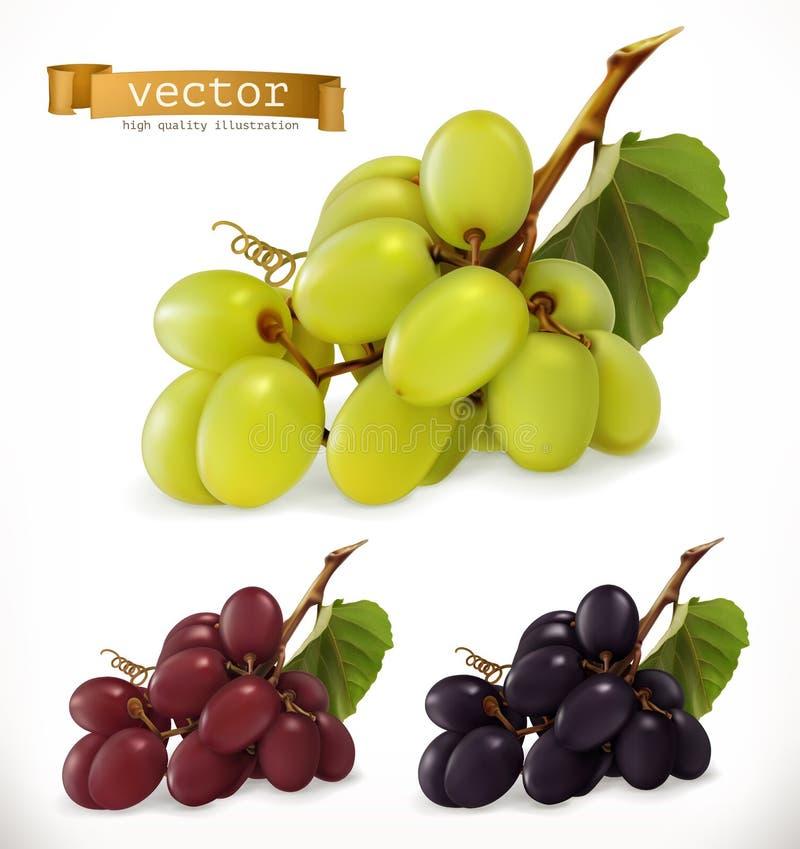 Uve da tavola rosse e bianche, acini d'uva insieme dell'icona di vettore 3d illustrazione vettoriale