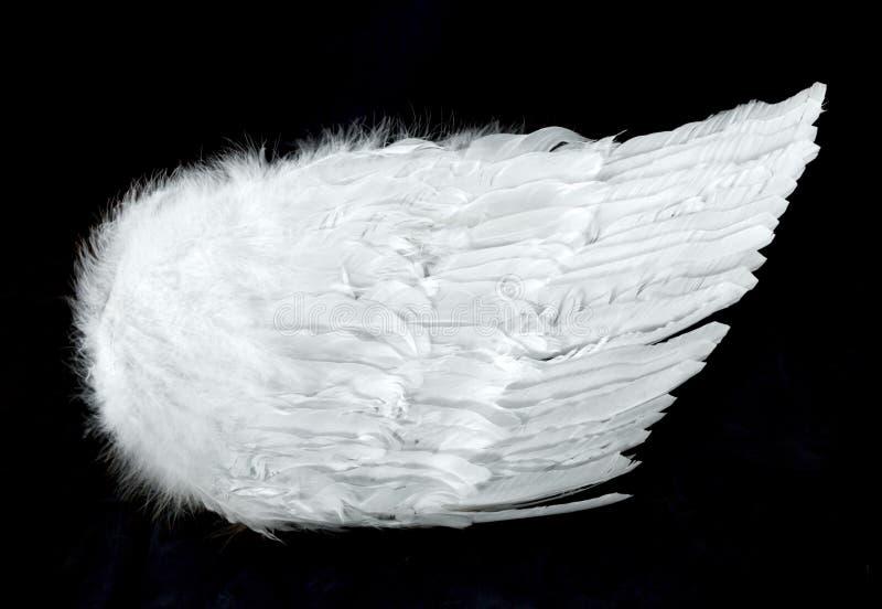 uwagi na boczne anioła czarne odizolowanych skrzydła fotografia stock