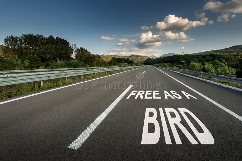 Uwalnia Jako Ptasia wiadomość na Asfaltowej autostrady drodze przez wsi zdjęcie royalty free