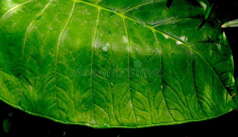 Uwydatniający zielony liść patern obraz royalty free