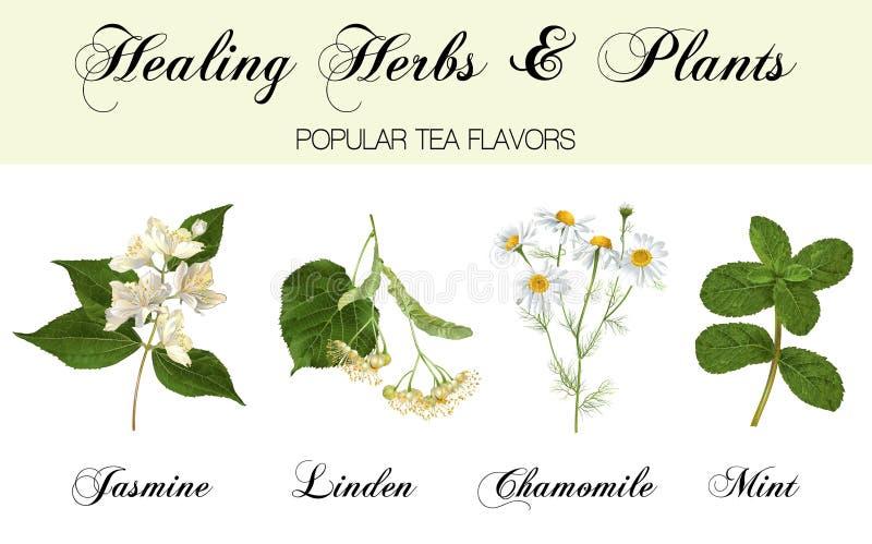Uzdrawiający rośliny ustawiać ilustracji