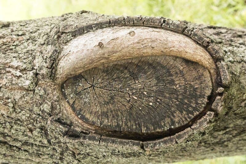 Uzdrawiający rozcięcie gałąź drzewo z wycinanką w postaci ilustracji