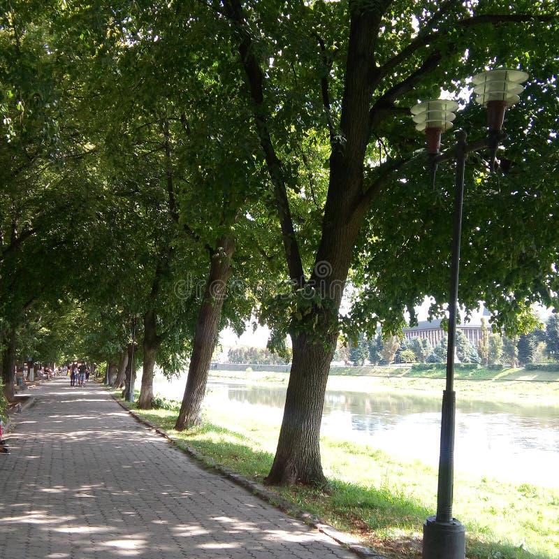 Uzhgorod - Linden Alley imagen de archivo