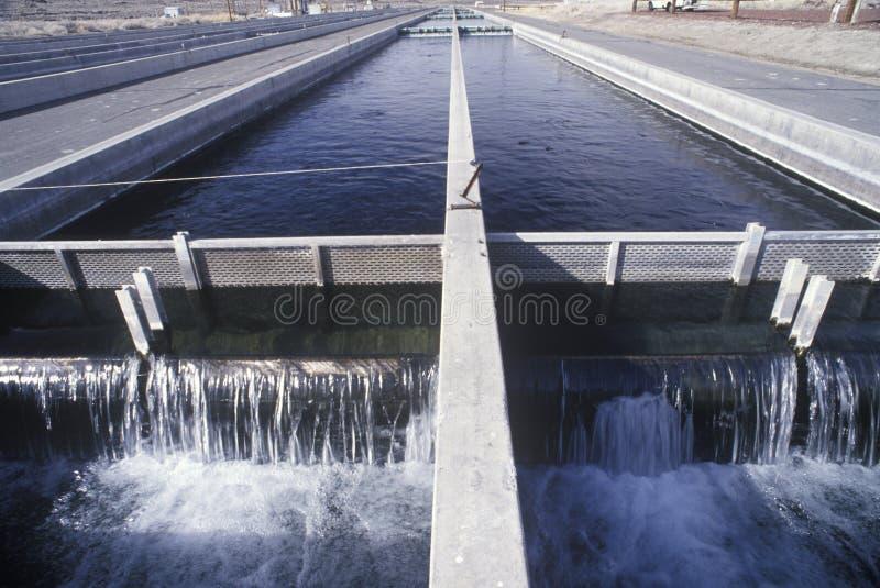Uzupełniać jeziora przy ryba Skacze wylęgarnia, północ Samotna sosna, CA zdjęcie royalty free