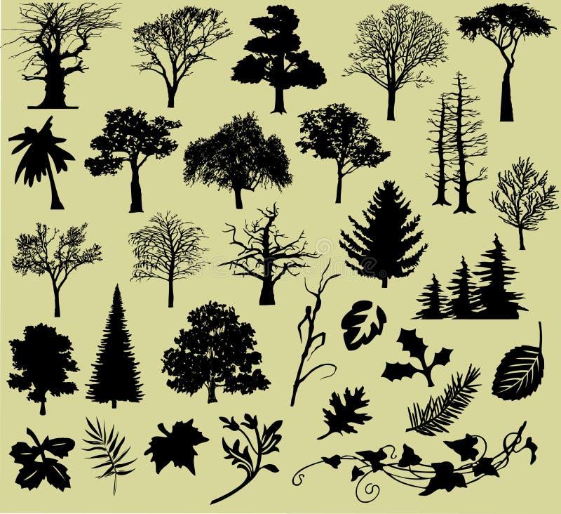 Várias árvores e folhas