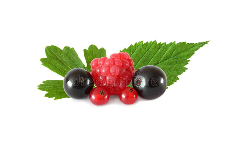 Várias bagas dos frutos frescos (framboesas, corintos pretos, corintos vermelhos), com as folhas isoladas imagem de stock