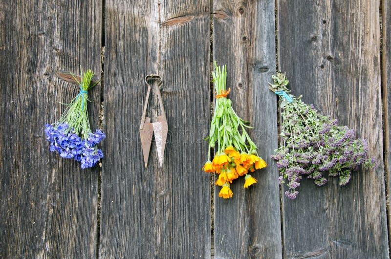 Download Várias Ervas Médicas Na Parede De Madeira Velha Foto de Stock - Imagem de cozinha, cozinhar: 26506934