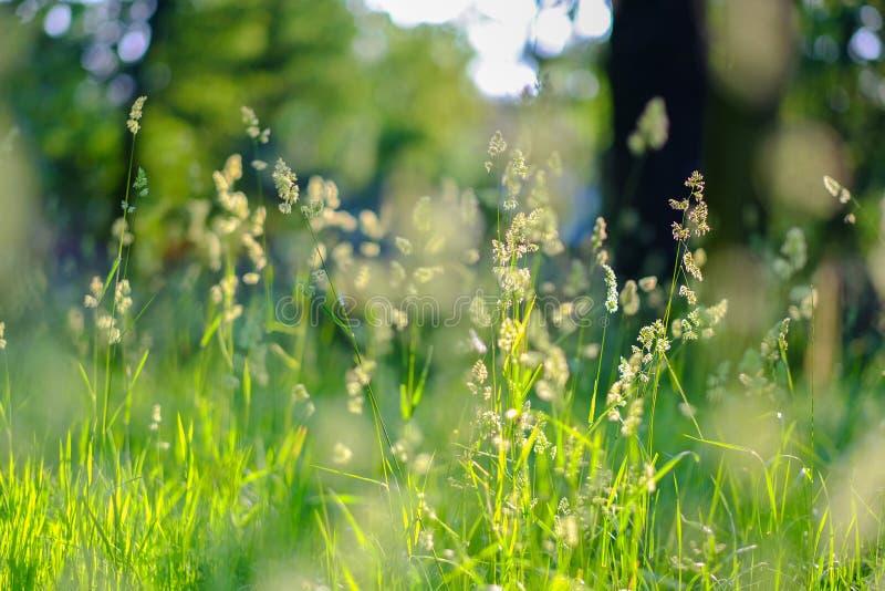 Várias ervas verdes na floresta no verão Conceito da prote??o ambiental fotografia de stock royalty free